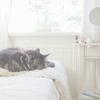 死守幸福的猫