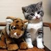 压腿的加菲猫